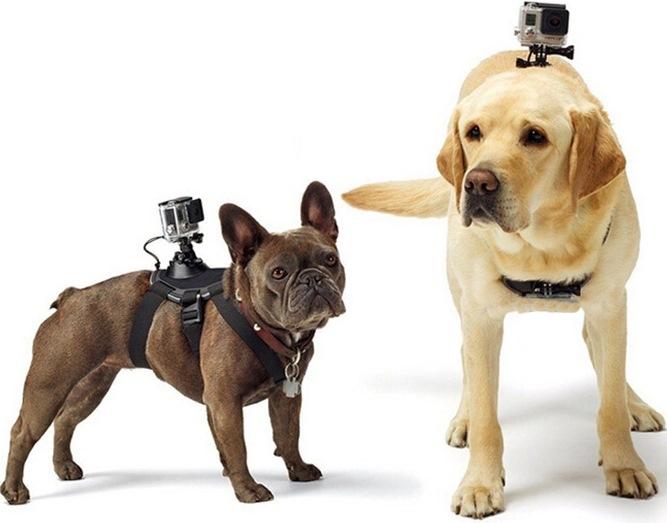 Крепление экшн камеры на собаку или кошку для GoPro и других камер