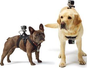 Крепление экшн камеры на собаку или кошку